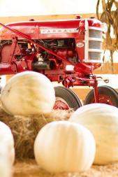 tractorpumpkins
